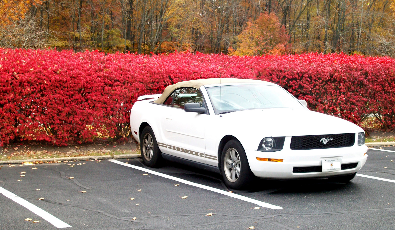 Performance white 2006 ford mustang v6